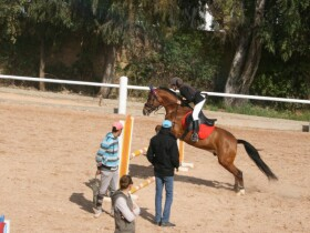 Poney club de Rabat Poney club de Rabat Rabat