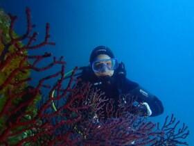 Le Dauphin Plongeur à M'diq
