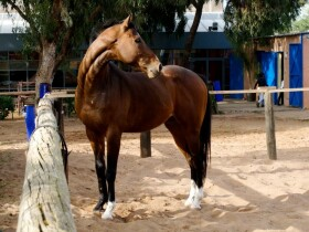 Royal Club Equestre Anfa Royal Club Equestre Anfa Casablanca